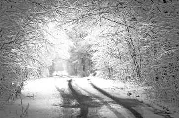 Winter snow forest. Black and white photo. Space for text.