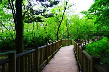 Taisho-ike pond, Kamikochi, Nagano, Japan