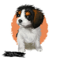 Cavalier king Charles spaniel puppy breed lap toy dog originated in United Kingdom. Domestic animal pet of small sizes canine purebred pet isolated on white background digital art illustration