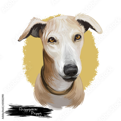 Chippiparai puppy dog breed watercolor digital art