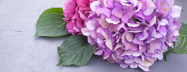 Zelfklevend Fotobehang Hydrangea Pink hydrangea flowers, on a gray background, free space for text. Card, Copy space,