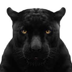 Printed roller blinds Panther black panther shot close up with white background