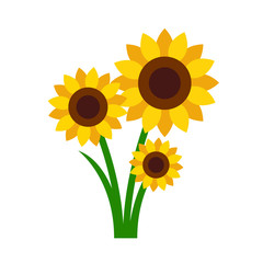 Sunflowers isolated on white background. Vector stock.