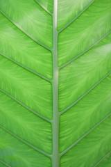 Close up green leaf pattern