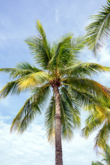 The most beautiful picture of palm tree, sea with blue sky background