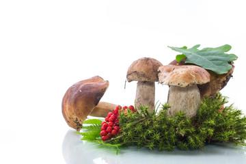 white forest mushroom