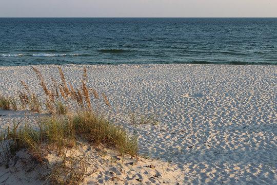 Sea Oats by the Beach