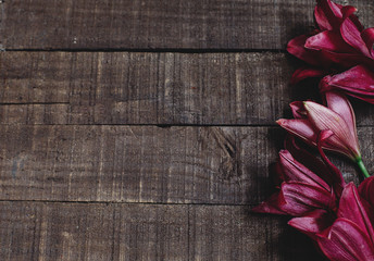 beautiful red purple lily flower on rustic wooden background flat lay. gorgeous bloom minimalistic  on rustic wood backdrop. space for text. greeting card. celebration concept. spring image