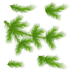 Pine branches on a white background. Set for decor. Christmas. Vector. Eps 10.
