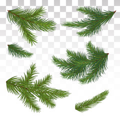 Set of green pine branches. Isolated. Christmas. Decor. The Christmas tree. Vector illustration. Eps 10.