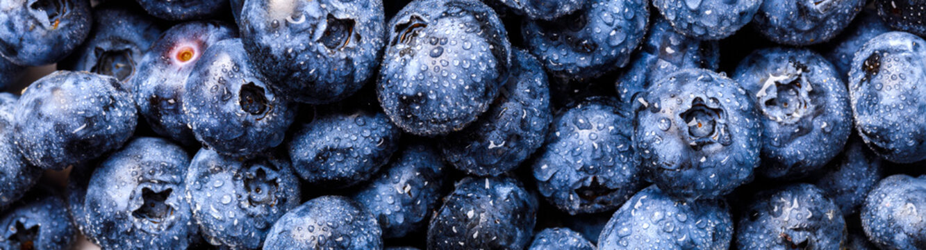 Surface is covered with a thick layer of blueberries. Natural background. Concept Healthy Food. Diet Nutrition . Top View.Single Banner. selective focus.