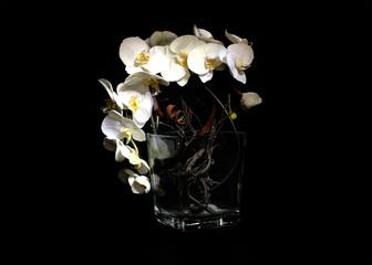 Orchidea in the dark