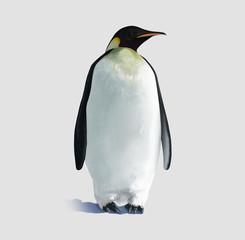 Pinguino isolato
