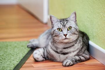 Getigerte Katze liegt im Flur