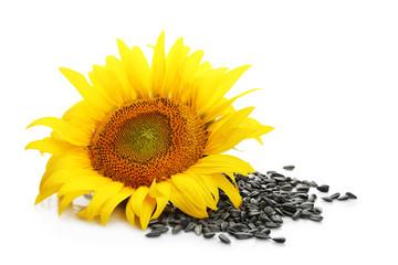 Fotobehang Zonnebloem Beautiful sunflower and seeds on white background