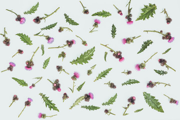 Floral pattern made of thistle with pink and purple  flowers, green leaves, branches and thorns on white background. Flat lay, top view. Valentine's background. Isolated. Toned.