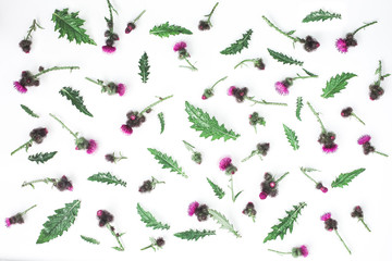 Floral pattern made of thistle with pink and purple  flowers, green leaves, branches and thorns on white background. Flat lay, top view. Valentine's background. Isolated.