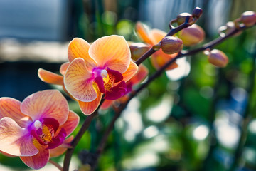 Orange and purple orchids against a colorful soft focus background