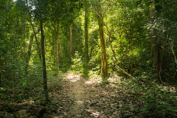 trail in the bamboo thickets tropical jungles of South East Asia