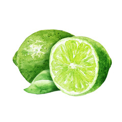 Hand drawn watercolor lime fruit composition isolated on white background. Green citrus with leaf and cut half. Food illustration.