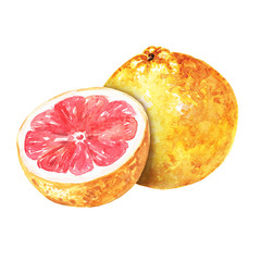 Hand drawn watercolor grapefruit, delicious citrus fruits with cut half isolated on white background. Food illustration.