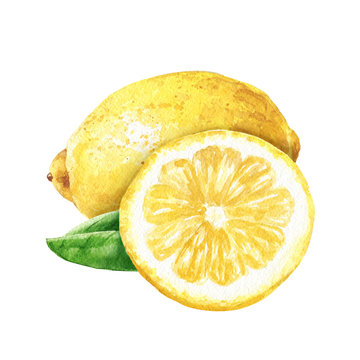 Hand drawn watercolor lemon with cut slice isolated on white background. Citrus fruits food illustration.