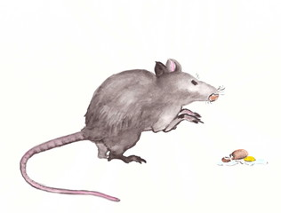 Drawing with watercolors: a large gray rat with a broken egg.