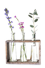 plant in test tube