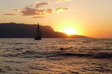 sailing regatta at sunset