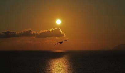 Deurstickers Kangoeroe coucher de soleil sur le mer Tyrrhénienne