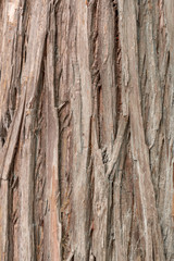 Close up bark texture pattern of brown tree for background