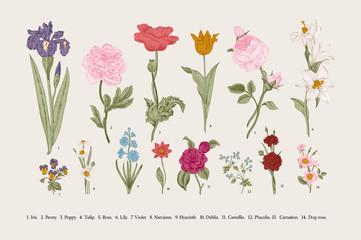 Classical botanical illustration. Victorian garden flowers. Vector vintage set.