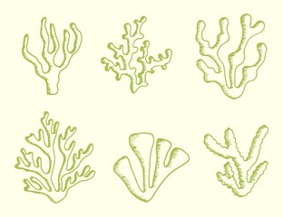 algae set drawing of a handmade monochrome vector. isolated on white background