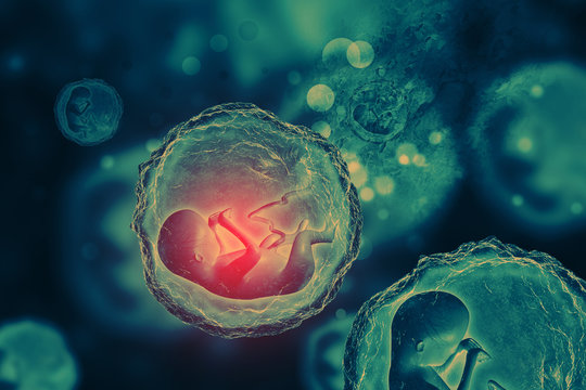 Human fetus on scientific background