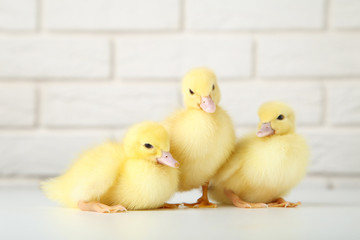 Little yellow ducklings on brick wall background