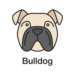 English Bulldog color icon