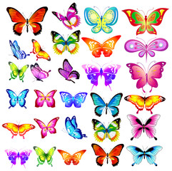 beautiful color butterflies,big set, isolated  on a white