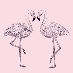 Flamingo sketch vector illustration.