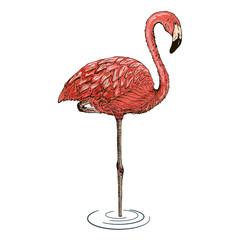 Flamingo sketch vector illustration.