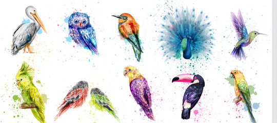 Watercolor birds set Vector. Peacock, owl, pelican, parrot, humming birds collections