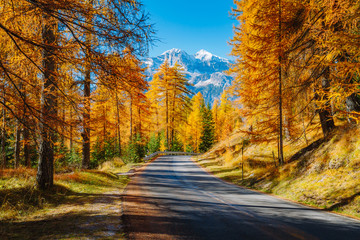 Wall Mural - Magical yellow larches. Location place Dolomiti Alps, Cortina d'Ampezzo, Italy, Europe.