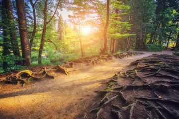Wall Mural - Majestic view on bright path with sunny beams. Location Plitvice Lakes National Park, Croatia.