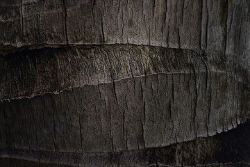 Beautiful wooden texture of a trunk of a palm tree close-up. Bark with cracks