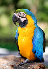Photo of a bright macro parrot