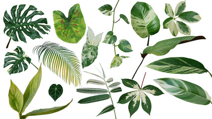 Tropical leaves variegated foliage exotic nature plants set isolated on white background, clipping path with plant common name included (Monstera, palm leaf, Devil's ivy, ginger, bamboo, etc.). Wall mural