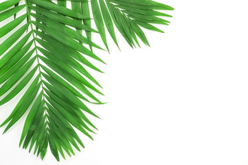 green palm branches on a white background.abstract. top view.copy space