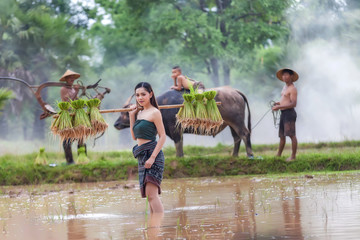 Lifestyle of rural Asian women in the field countryside thailand