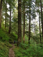 two Hikers on a Path in Olympic National Park in Washington
