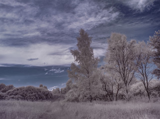 infrared photography - ir photo of landscape with tree under sky with clouds - the art of our world and plants in the infrared camera spectrum
