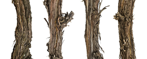 Collection dry branches of the vine isolated on white, including clipping path Fototapete